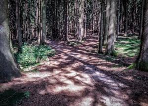 Licht fällt in den Wald