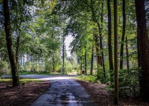 Kreuzung im Wald