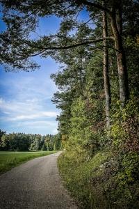 An langem Waldrand entlang