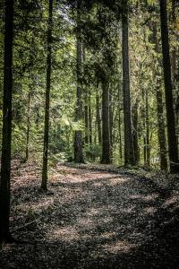 Weg knickt im Wald