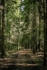 Gerader Weg im Wald