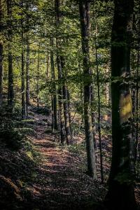 Am bewaldeten Hang entlang