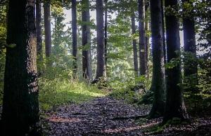 """Auf dem """"Höhlenweg"""" im Wald"""