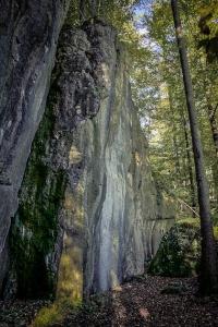 Hohe Felswände im Wald