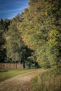 Am nächsten Waldrand entlang