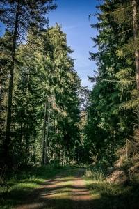 Lange Etappe auf Forstweg