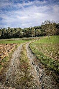 Geschotterter Weg richtung Waldrand