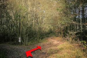 Weg knickt nach rechts in den Wald
