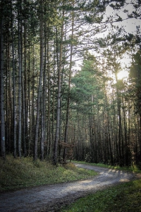 Geteerter Weg im Wald nach links oben