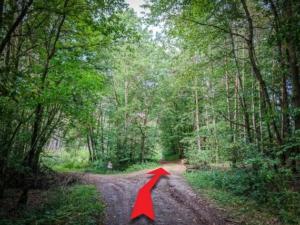 Im Wald noch einmal nach rechts abbiegen