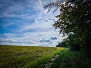 An einem langen Waldrand entlang