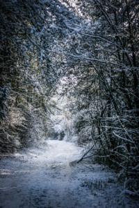 Kurz durch lichten Kiefernwald