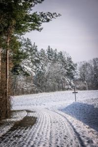 Ecke eines Waldrands mit Wegweiser
