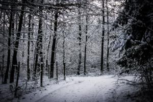 Gerade an eingezäunter Baumschonung vorbei