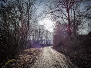 Hohlweg durch die Hecken