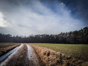 Weg zwischen Feldern in Richtung Wald