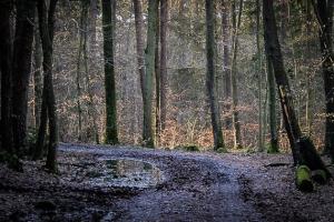 Kurve im Wald