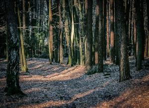 Licht zwischen den Bäumen