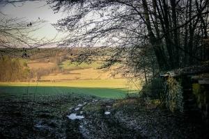 Waldrand über dem Mittelebrach-Tal