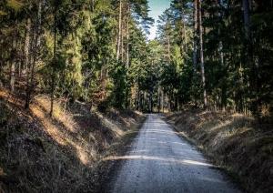 Gerader breiter Forstweg