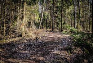 Forstweg bergab