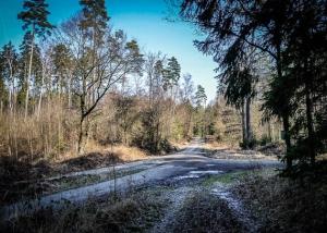 Große Waldwegkreuzung