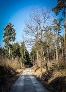 Breiter gerader Forstweg