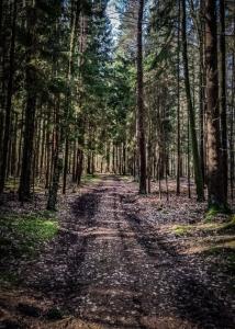 Weitere gerade Etappe durch den Wald