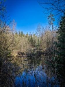 An Wald-Weihern vorbei