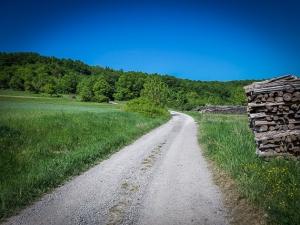 Bergauf Richtung Waldrand