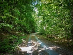 Deutliche Steigung im Wald