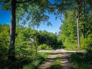 Nächste Wegkreuzung im Wald